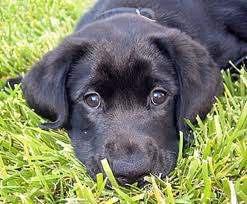 blackpuppy
